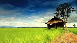 Rice farm ข้าว - YouTube