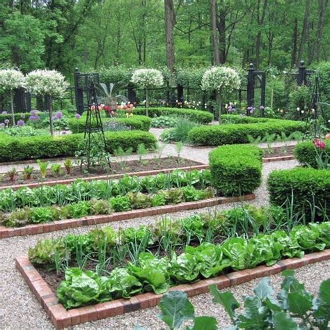 easy vegetable garden layout ideas  beginner decoredo