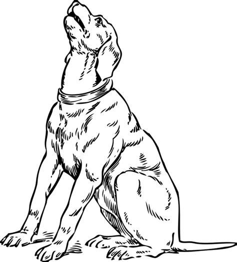 malvorlagen hunde