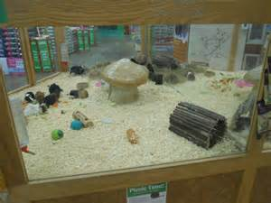 Pets at Home Guinea Pig