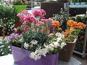 Blumen Für Den Balkon : der baywa gartentipp auf vol at die balkonblumen garten ~ Lizthompson.info Haus und Dekorationen