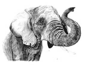 Elephant Head Drawing Black and White