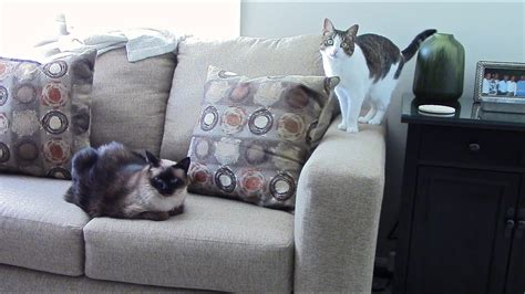 Stop Cat From Scratching Furniture by How To Stop Cats From Scratching Furniture