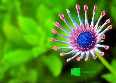 Laptop Windows Wallpapers Pixelstalk God