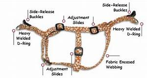 How To Put On A Cat Harness Diagram