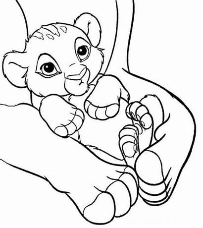 Lion Coloring King Pages Simba Lions Tigers