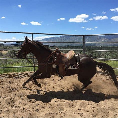 saddle pads usa pad besteverpads barrel