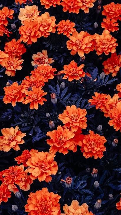 4k Orange Flowers Ultra Wallpapers Aesthetic Garden