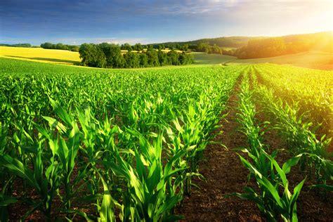 crop insurance types  crop insurance ruhl