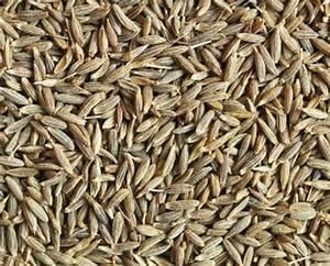 Cumin (Roman cumin seeds - Jeera)
