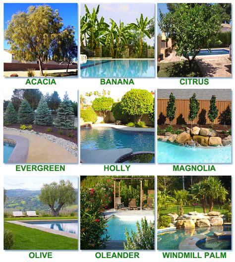 best plants around swimming pool best worst trees to plant around a pool intheswim pool blog