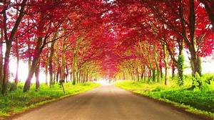 Road, Between, Red, Autumn, Trees, During, Daytime, Hd, Nature, Wallpapers