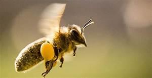 Wann Verlassen Wespen Ihr Nest : flei ige sammler honigbienen ~ A.2002-acura-tl-radio.info Haus und Dekorationen