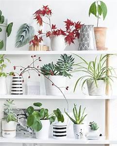 Welche Pflanzen Fürs Schlafzimmer : zimmerpflanzen versch nern wohnr ume und sorgen f r ein ausgeglichenes raumklima doch welche ~ Frokenaadalensverden.com Haus und Dekorationen