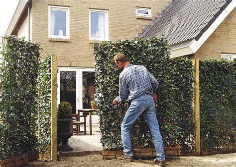 immergrüne bepflanzungen am gartenzaun pflegeleichte moderne sichtschutz kombination aus