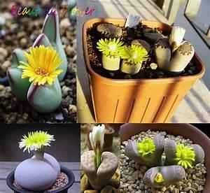Succulentes Pas Cher : plante de bureau promotion achetez des plante de bureau promotionnels sur ~ Melissatoandfro.com Idées de Décoration
