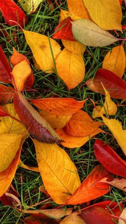 Lock Screen Foliage Autumn Wallpapers Kolpaper Backgrounds