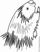 Porcupine Coloring Pages Colouring Drawing Line Clipart Cliparts Brain Getdrawings Print Library Lightupyourbrain sketch template