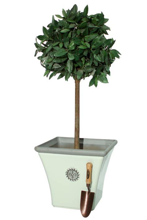 cm atrium white decorative planter  primrose