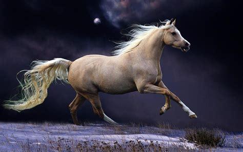 running horse horses brown fast animal winter arabian wild pretty forward desktop