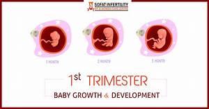 1 To 3 Months Pregnancy Period