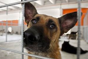 What the animal shelter won't tell you