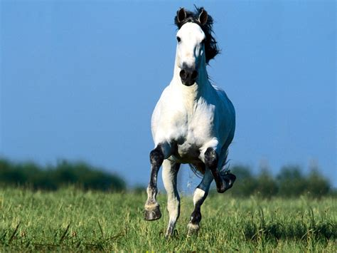 horse desktop wallpapers horses running hd field cool sky powerful pretty pony ever very most cute