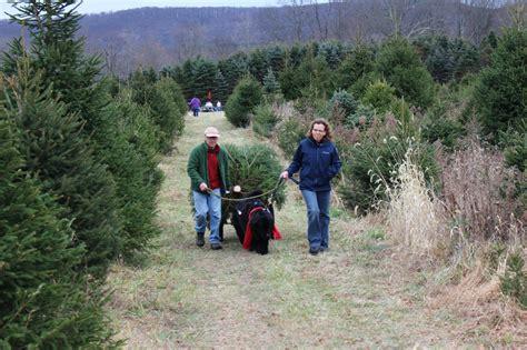 christmas tree farms pennsylvania gallery of christmas tree farm pennsylvania fabulous 5061