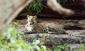 Sanjay Gandhi National Park – A Green Heaven for ...