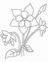Columbine Coloring Perennial Flower Drawing Pages Getdrawings sketch template
