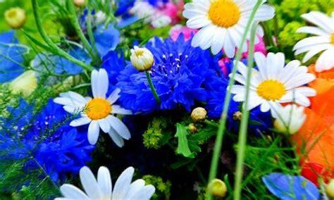 sognare fiori significato fiori fiore interpretazione dei sogni romoletto