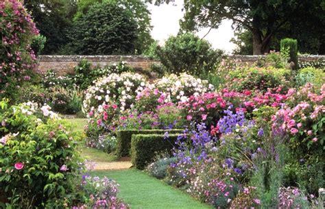 olivier cuisine les roses reines du jardin anglais jardins anglais