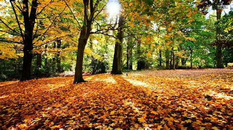 Autumn Wallpapers Hd by Autumn Wallpaper Hd Let You Feel The Magic Of Fall
