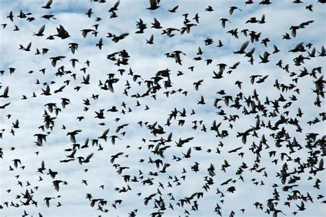 birds migration and berries duncraft