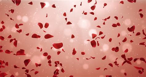 romantic flying light red rose stock footage video