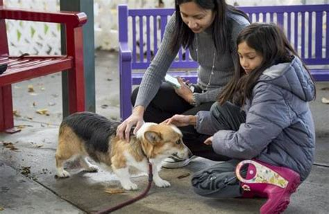 california animal shelter waives adoption fees  sees