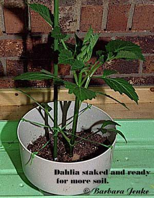 17 best images about informative garden tips on the shorts the giants and step by