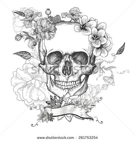 skull stock  images pictures shutterstock