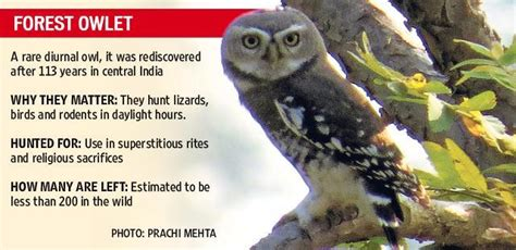 indias endangered species    save  talk