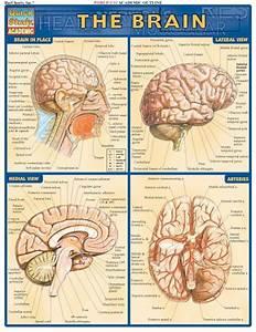 1000  Images About Multiple Intelligences  Brain Based