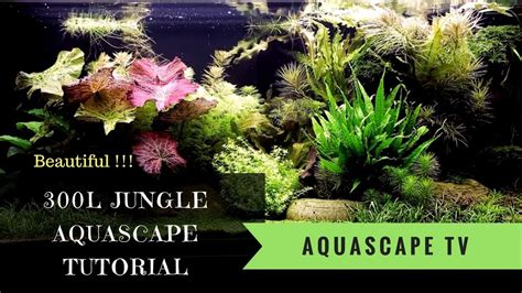tutorial aquascape now 300l jungle style aquascape tutorial with