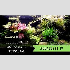 Watch Now! 300l Jungle Style Aquascape Tutorial With
