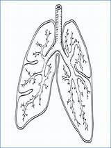 Coloring Lungs Respiratory System Pages Printable Sheet Getcolorings sketch template