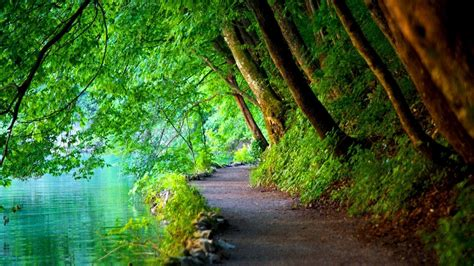 Background Nature Desktop Wallpaper Hd by Nature Trees Path River Landscape Croatia Wallpapers