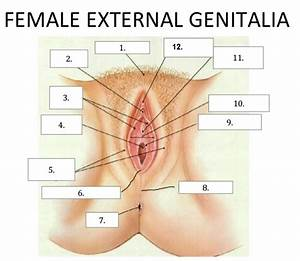 Female External Genitalia Test