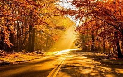 Fall Widescreen Road Sunshine Sunbeam Tree