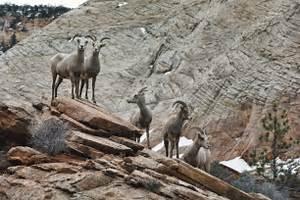 Wildlife Across Western America Badly Harmed By Severe Winter