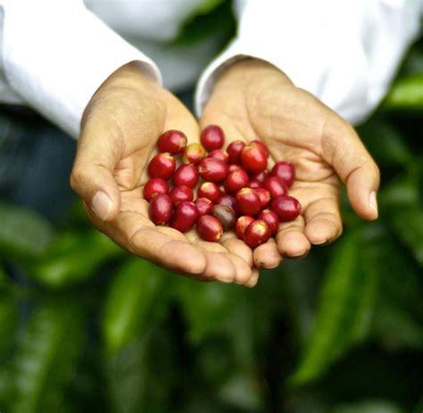 "Esmeralda special geisha coffee is a beautiful blend of soft acidity, with a fruity and floral sweetness that fills the mouth. ""Geisha"": Der teuerste Kaffee der Welt schmeckt nicht nach Kaffee - WELT"