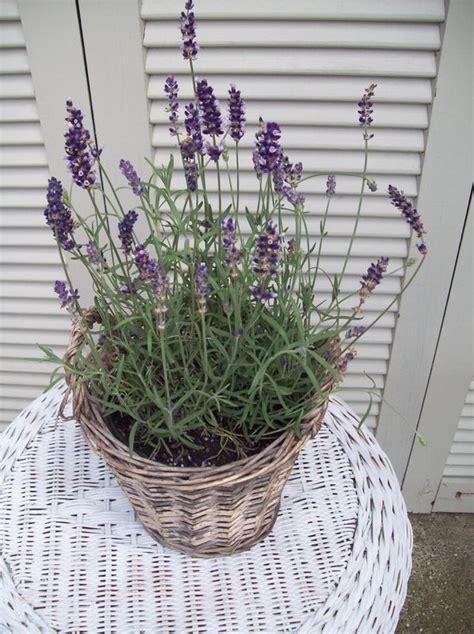 plante en pot exterieur plein soleil quelle plante mettre sur un balcon en plein soleil jardinier pro
