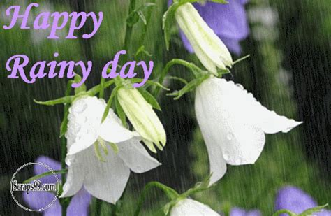 how to type a letter bbq 50 single black divas chat zone sparkpeople 22377   Happy Rainy Day White Flowers Raining Animated Picture